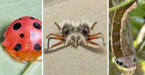 insectos-imitan