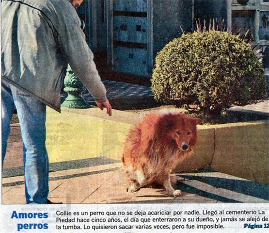 los_perros_mas_fieles_2