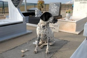 8 conmovedoras historias de perros, fieles hasta el final
