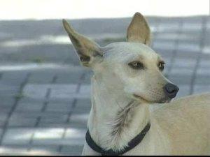 los_perros_mas_fieles_4