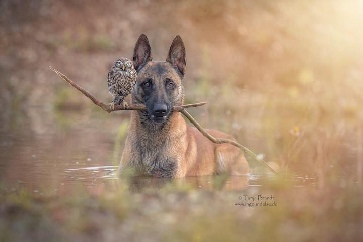 perro y buho amigos 1