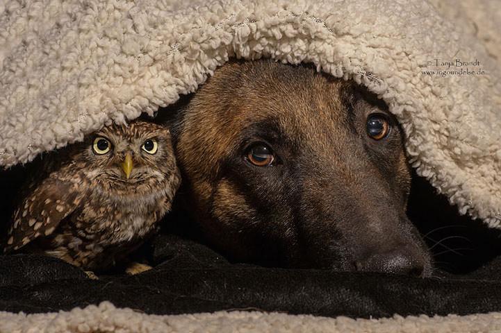 perro y buho amigos 10