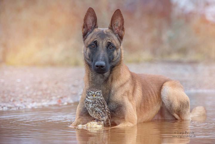 perro y buho amigos 11