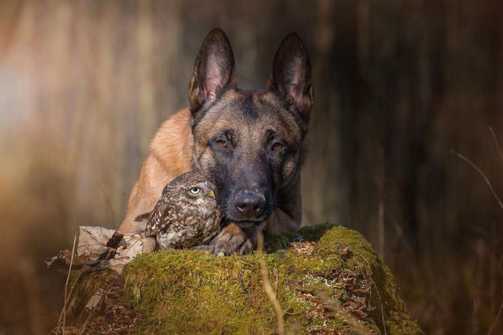 perro y buho amigos 12