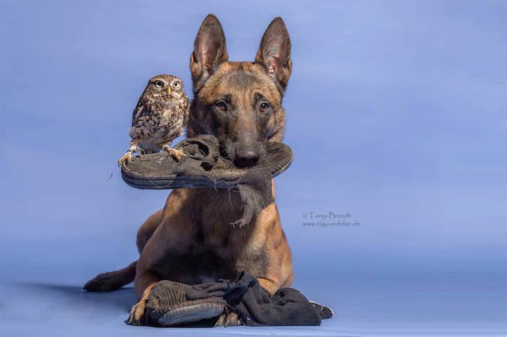 perro y buho amigos 14