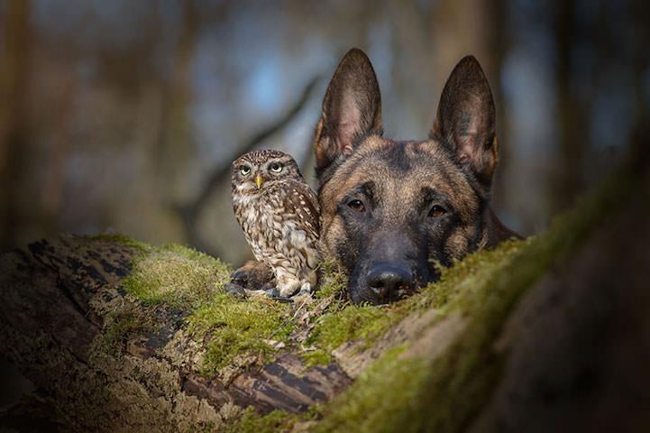 perro y buho amigos 2