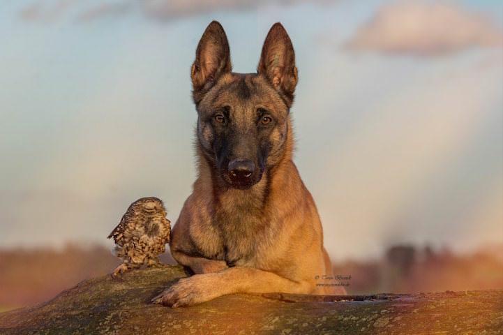 perro y buho amigos 3
