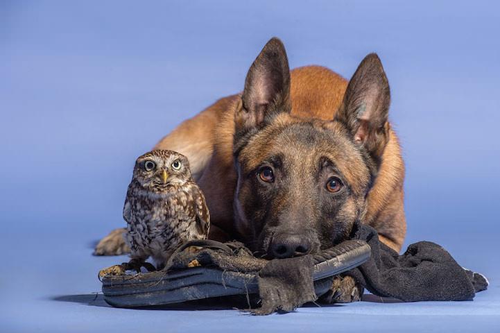 perro y buho amigos 5