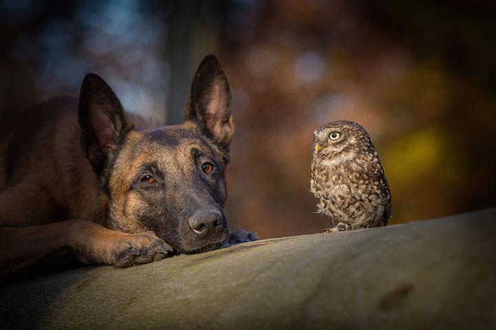 perro y buho amigos 6