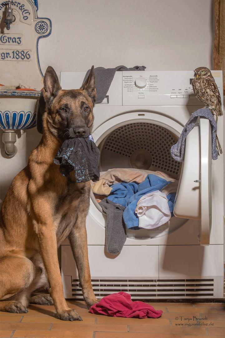 perro y buho amigos 7