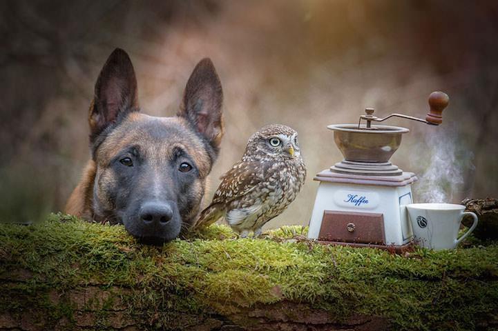 perro y buho amigos 8