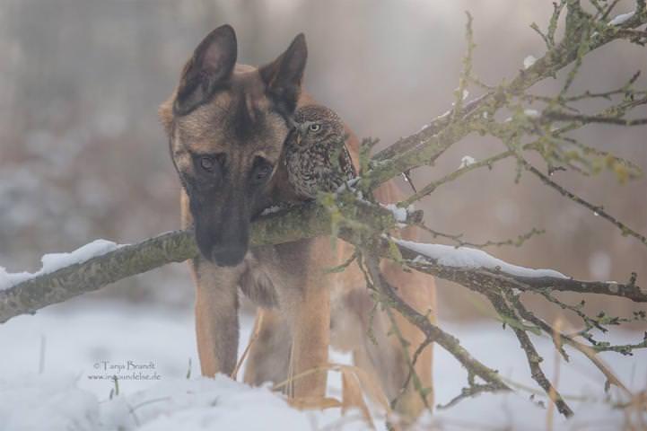 perro y buho amigos 9