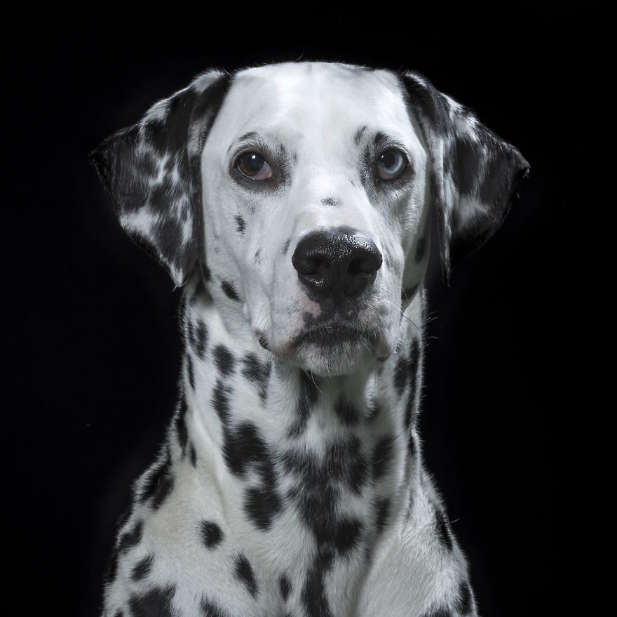 retratos_animales_13