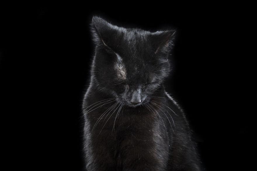 retratos_animales_4