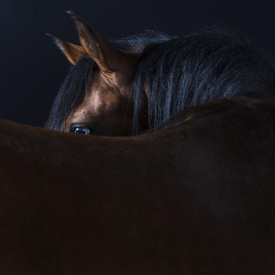 retratos_animales_5