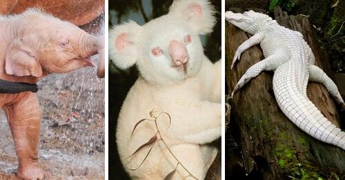 animales-albinos-sorprendentes