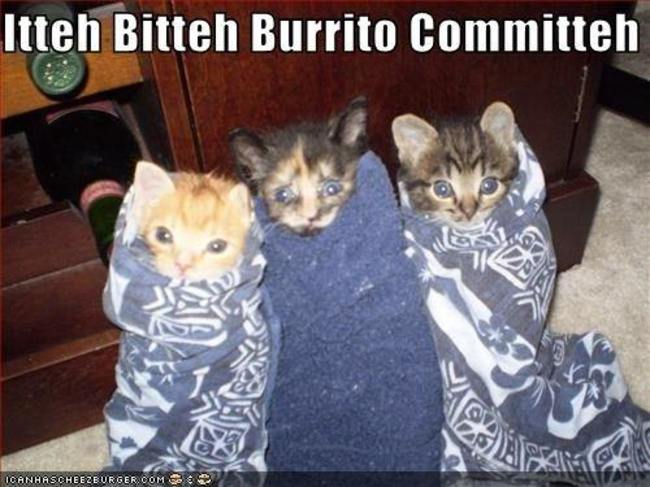 animales_burritos_23