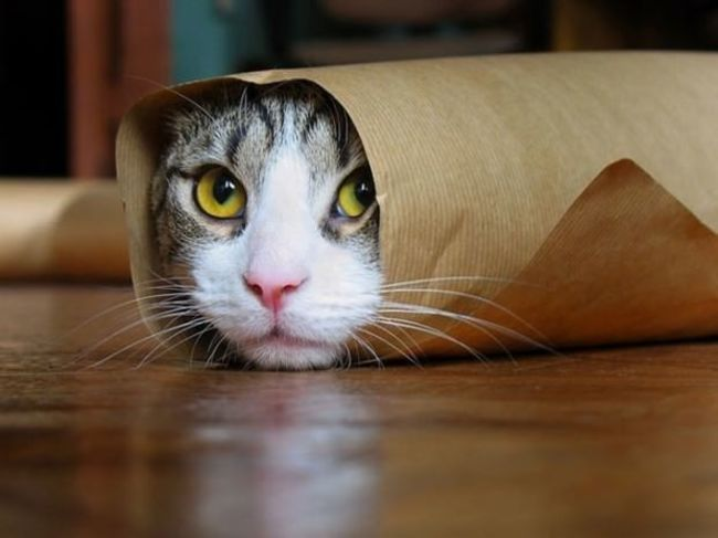 animales_burritos_29