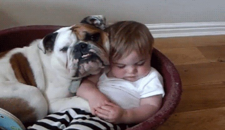aprender-perros