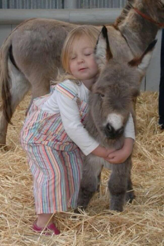 burros mini 12