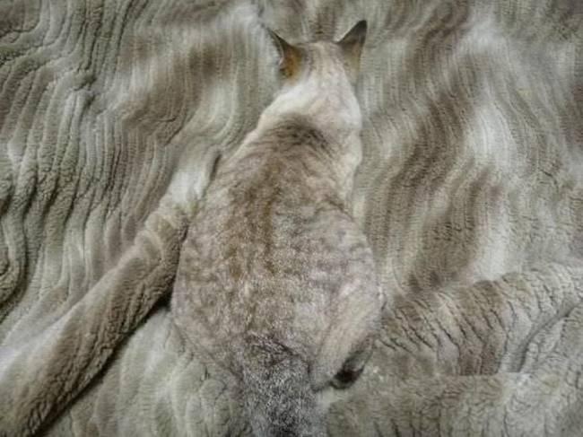 camuflaje_animales_18