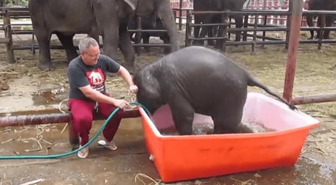 cria-elefante-bano