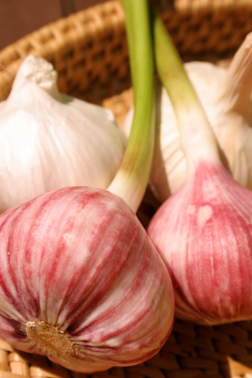 Fresh and Dried Garlic