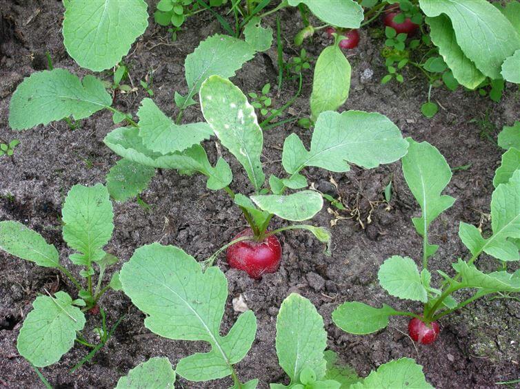 cultivos de sombra 9