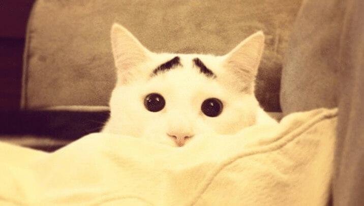 gato-preocupado