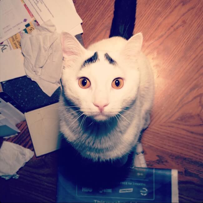 gato_triste_1