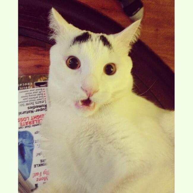 gato_triste_10