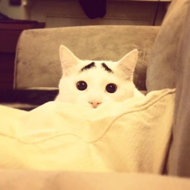 gato_triste_2
