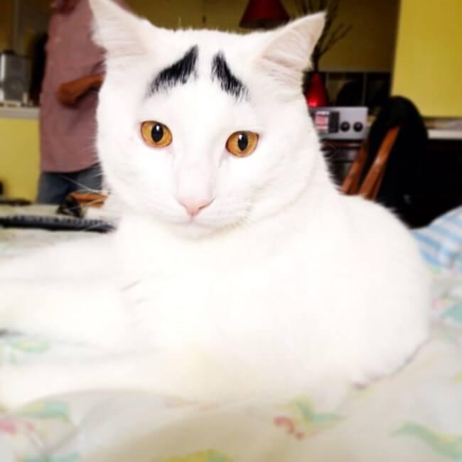 gato_triste_3