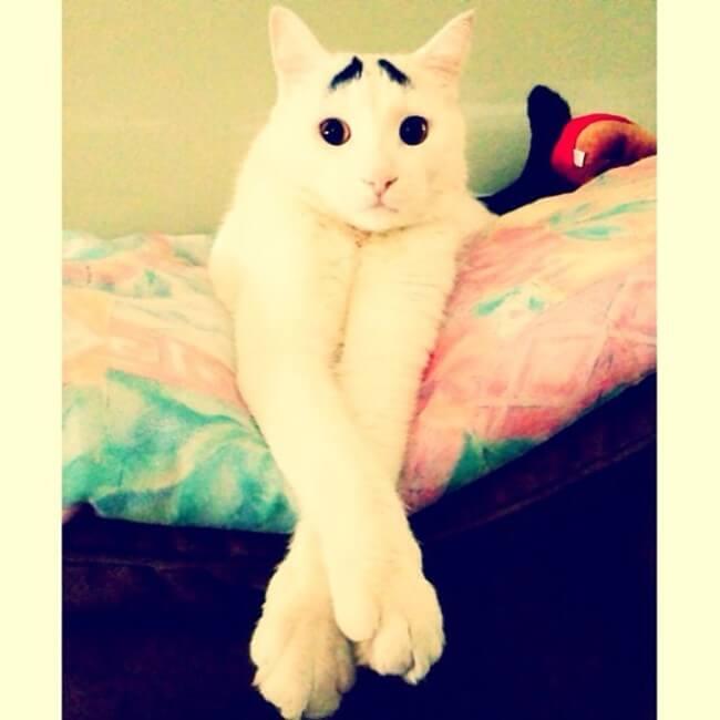 gato_triste_4