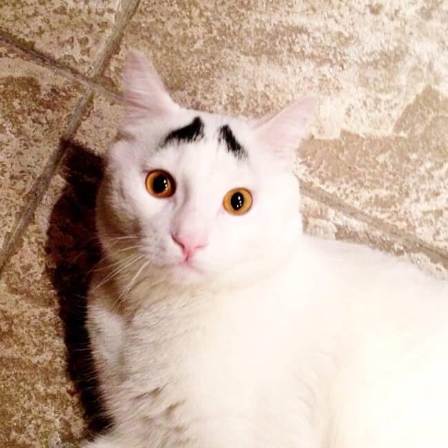 gato_triste_5