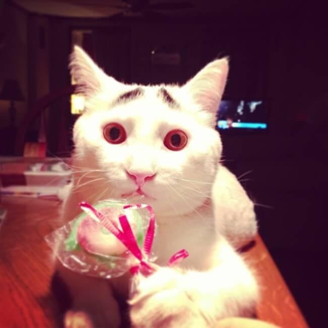 gato_triste_6