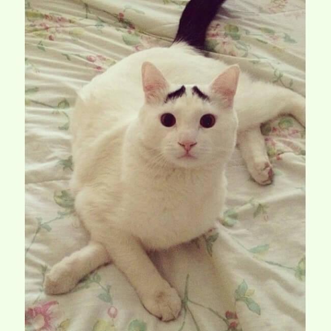 gato_triste_7