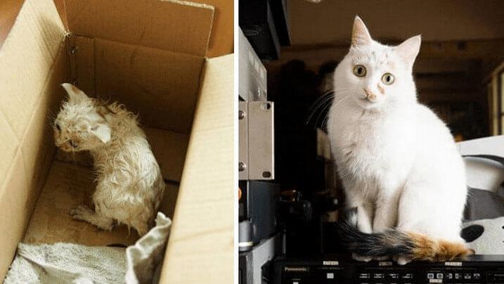 gatos-rescatado