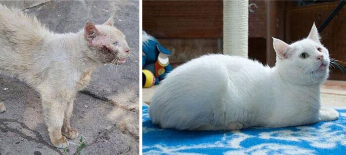 gatos rescatados 10