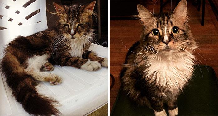 gatos rescatados 12