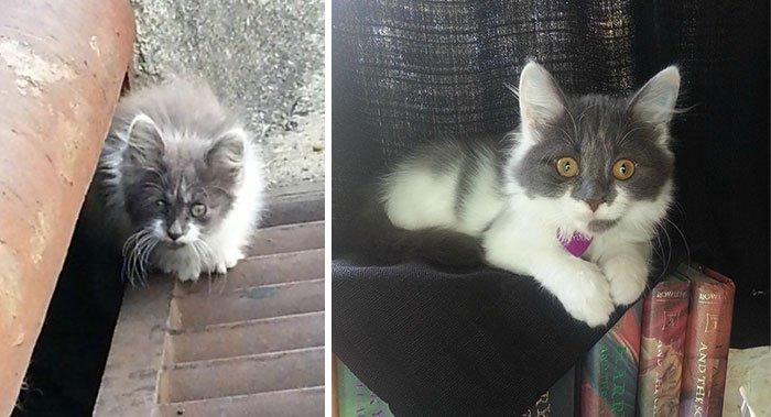 gatos rescatados 14