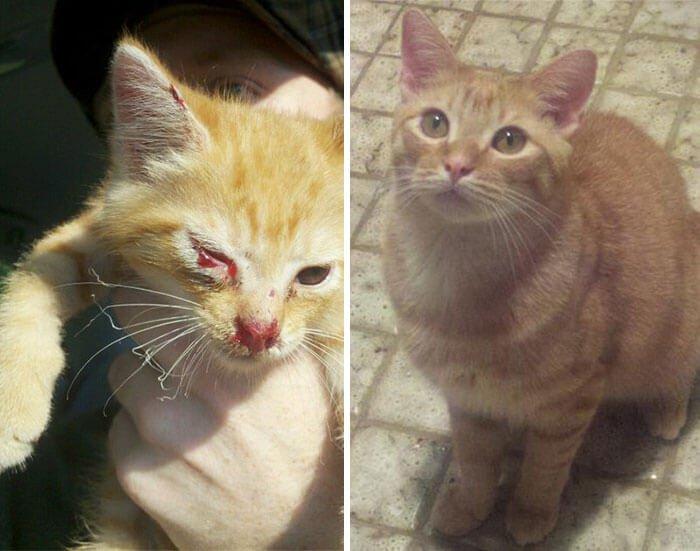gatos rescatados 15