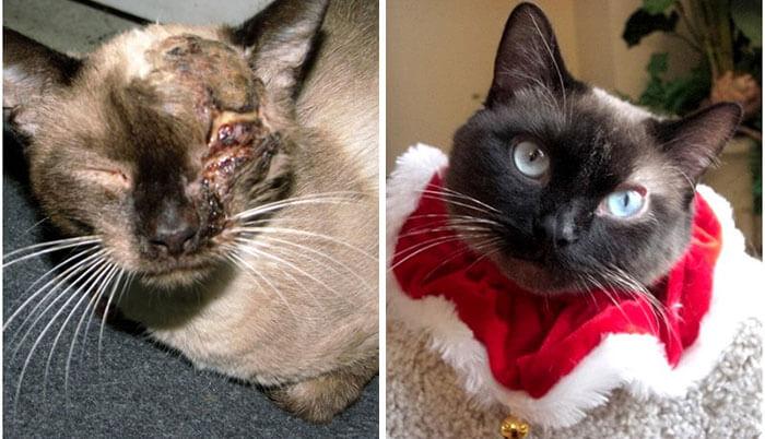 gatos rescatados 16