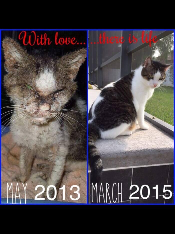 gatos rescatados 18
