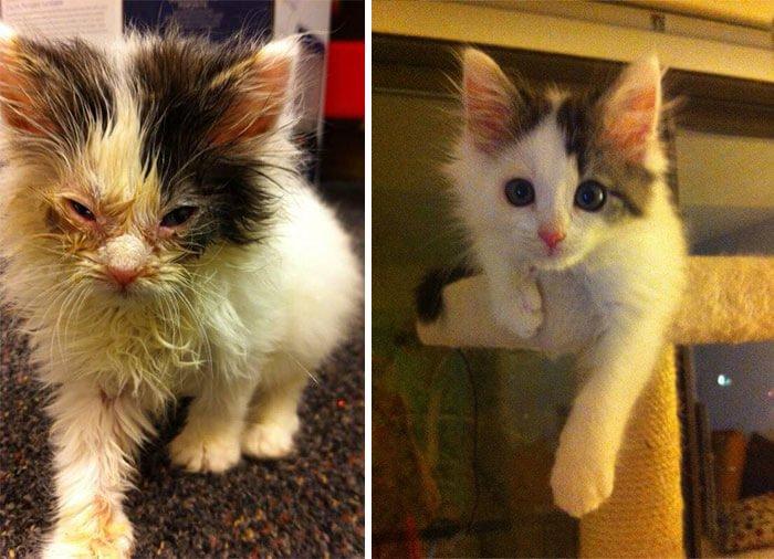 gatos rescatados 2