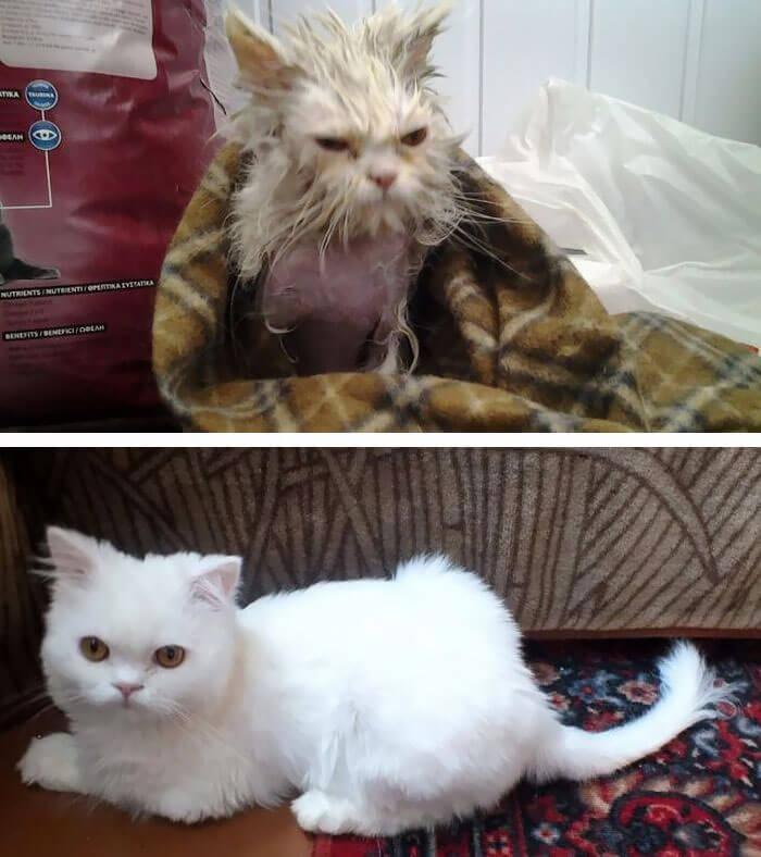 gatos rescatados 20