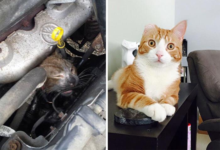 gatos rescatados 4