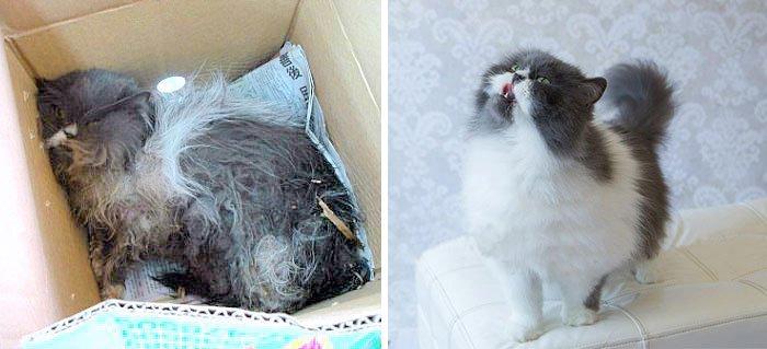 gatos rescatados 6