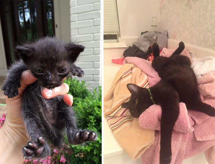 gatos rescatados 7