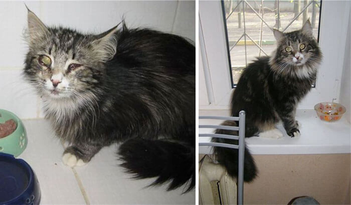 gatos rescatados 8